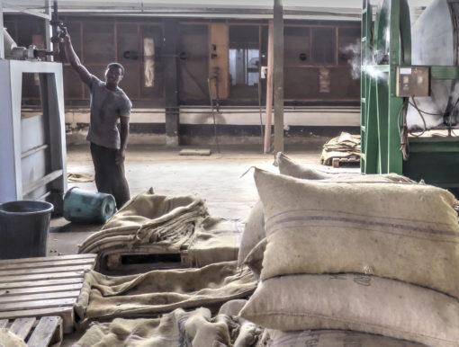 Ivory Coast's Cashew Future